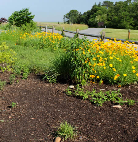 Garden Club project